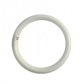 Λάμπα LED SMD TUBE κυκλική T9 G10Q 4000K 240V EUROLAMP